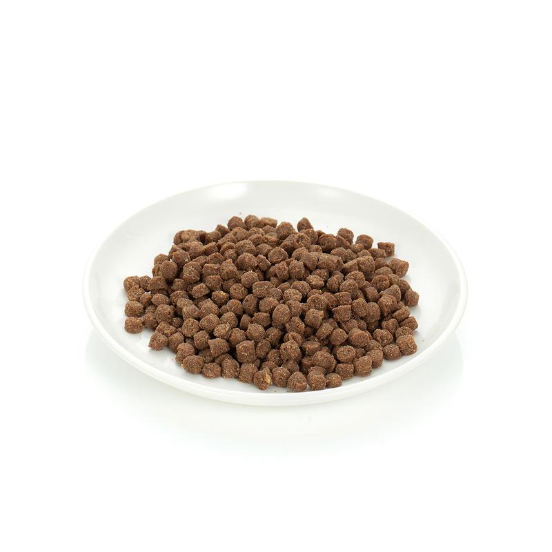 아스쿠 펠리쿠치나 연어 1.2kg