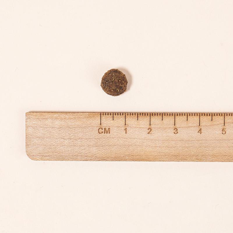 토모조 인섹트 독 어덜트 12kg