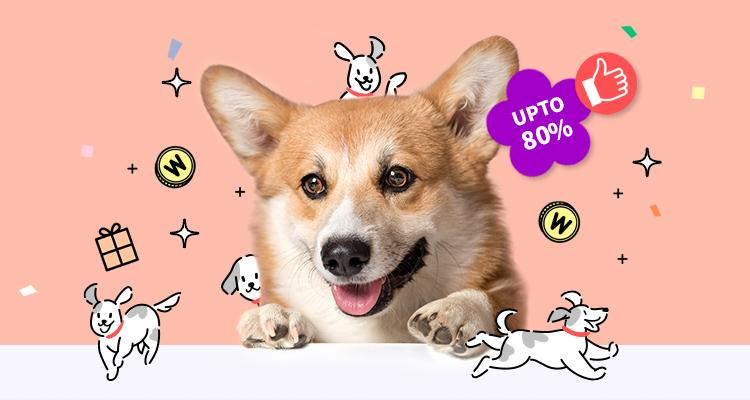 강아지대통령 ~80% 슈퍼 빅세일