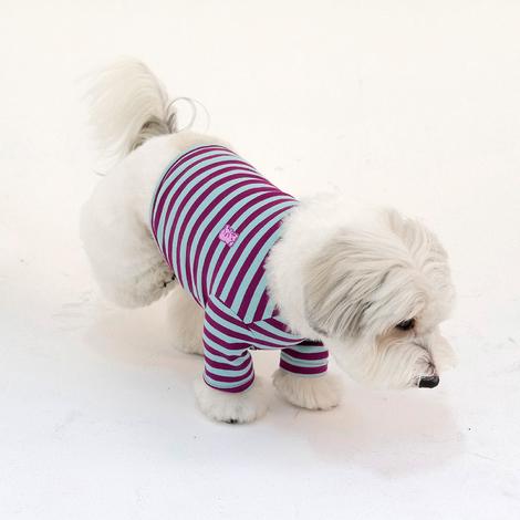 https://img.dogpre.com/web/dogpre/product/85/84557_detail_01607124.jpg