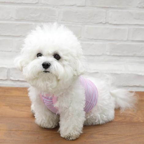 https://img.dogpre.com/web/dogpre/product/86/85822_detail_01372971.jpg