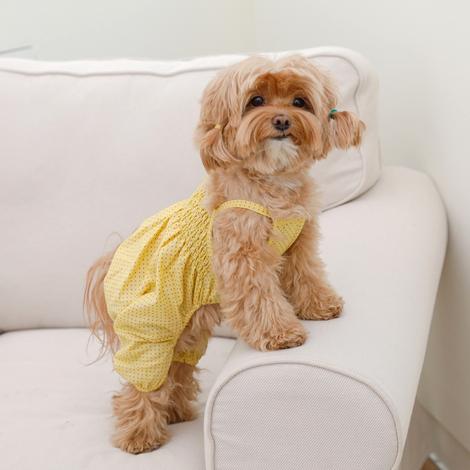 https://img.dogpre.com/web/dogpre/product/86/85978_detail_01495183.jpg